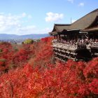 古都「京都」で観光しながらガッツリ稼ぐ。京都は観光客が多く稼げる風俗店も多い!